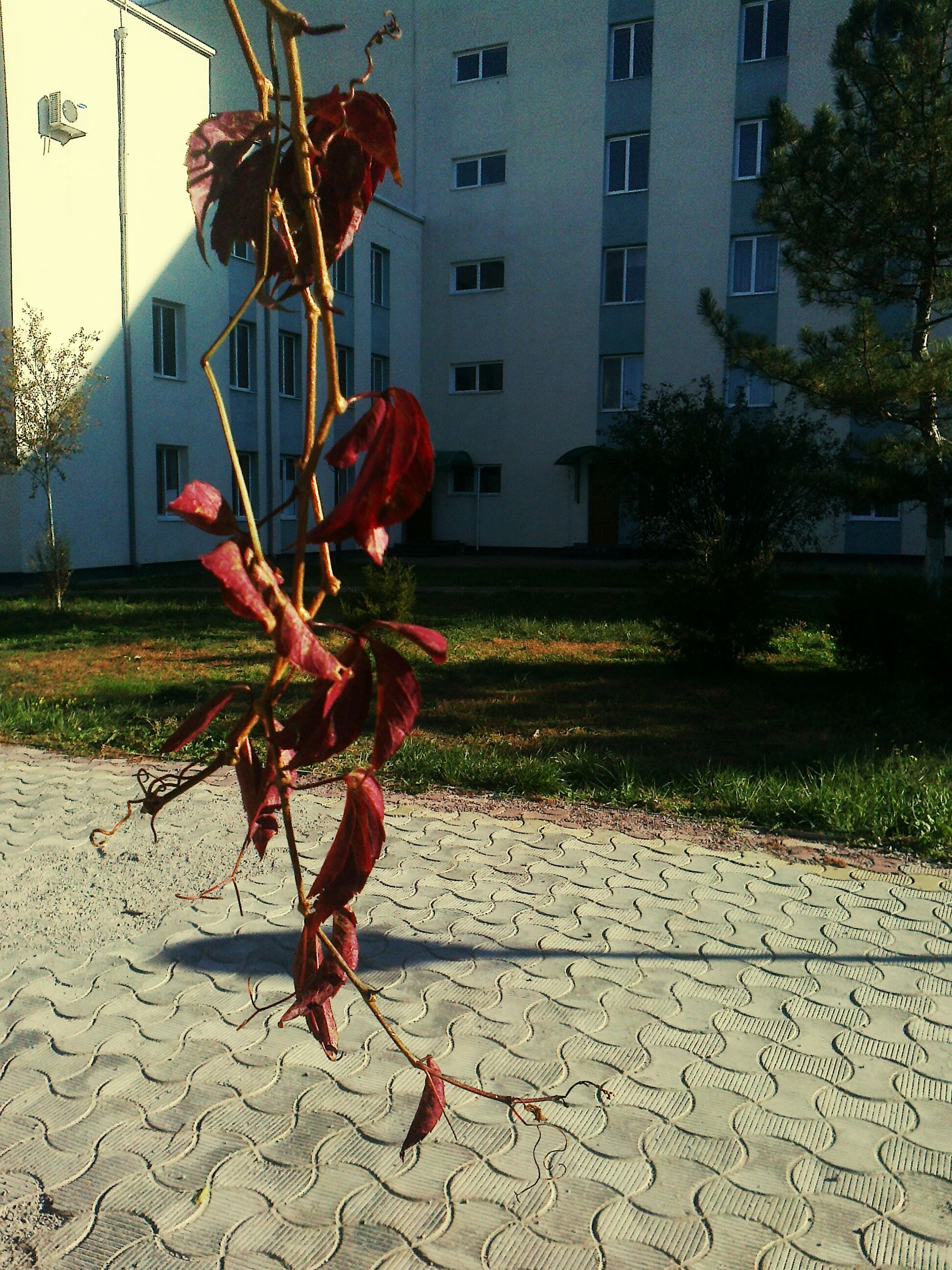 building exterior, architecture, built structure, outdoors, flower, no people, growth, city, day, plant, residential building, tree, red, nature