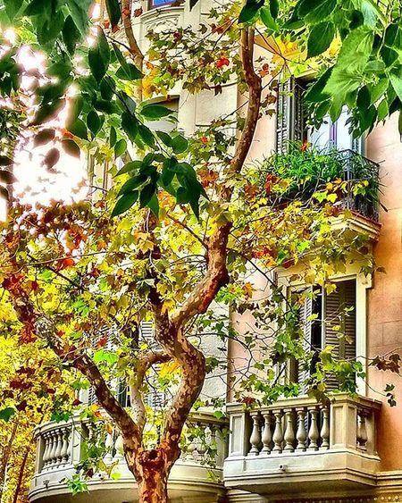 HDR Hdr_lovers Hdr_pics Kings_hdr Fotofanatics_hdr Besthdr Balconies Balcones Balcons Parveke Tree árbol Arbre Puu Barcelona Bcndreamers Bcnexplorers Thebarcelonist Igersbarcelona Igerscatalunya Green Verde Vert Vihreä World_besthdr