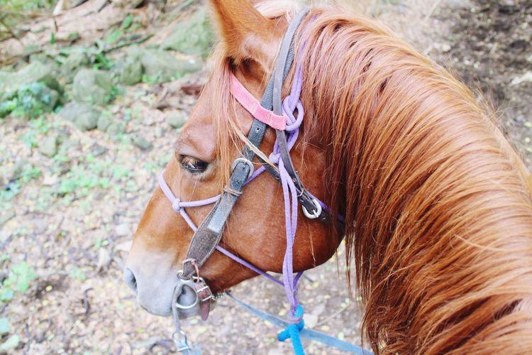 Hawaii Travel Kualoa Horse Riding