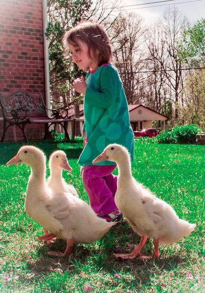 Oh my. Big Ducks. They just wanted to say hi😀😂😂😂 (I hope they are fully grown...) Exceptional Photographs Ducks Duck Update Kids With Ducks Kids With Pets The Following