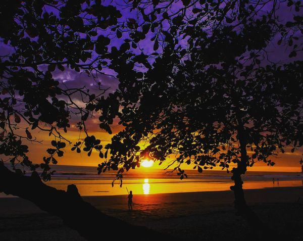 PuroSunset// #Nature  #Puravida #costarica #life #sunsetlover #susetporn Tree Water Sea Sunset Beach Silhouette Sun Sky Horizon Over Water