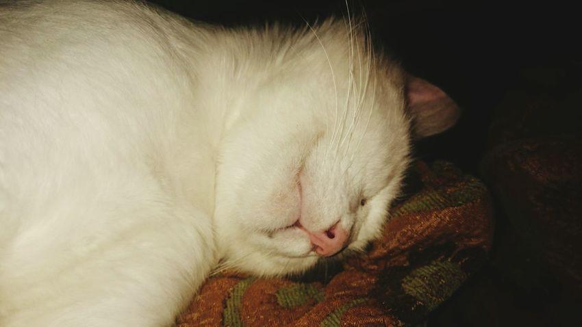 Mars LeChat Endormi Spotlight Calme Cat♡