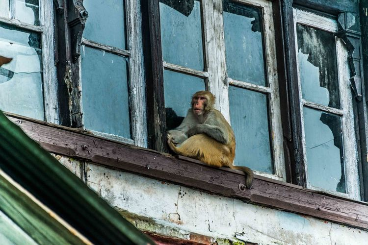 Low angle view of monkey on abandoned glass window
