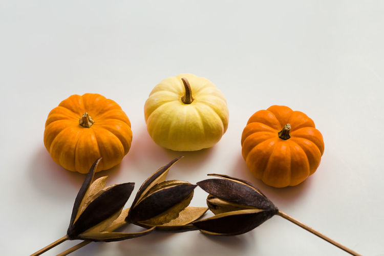 High angle view of pumpkins against white background