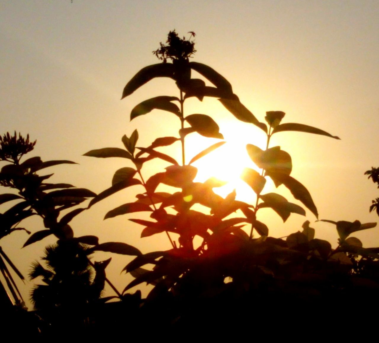 Low Angle View Of Plants Against Sky At Sunset