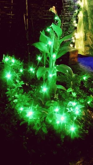 Green Color Illuminated Celebration Diwali Decorations Diwali💟🎇🎆🌌 Traditions Indian Festival Electricity  Holiday - Event Night No People