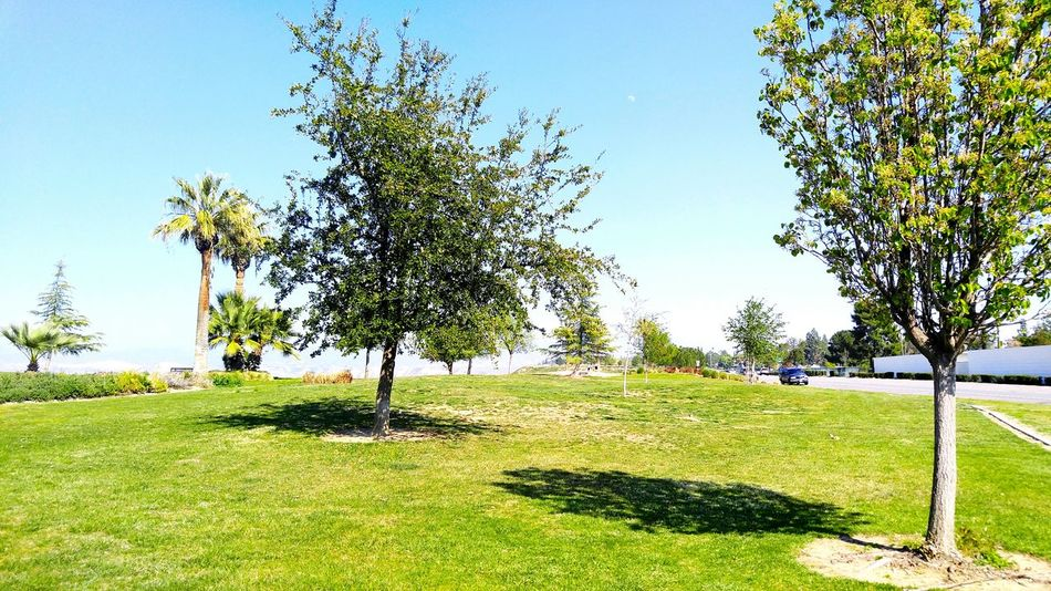 Thebluffs BakersfieldCA Kerncounty Trees Tree_collection  Trees And Sky Tree Photography Nature Nature_collection Nature Photography Nature Is Art Beautiful Beautiful Nature Beautiful Day Beautiful View Beautiful World Beautiful Scenery Beautiful Place Spring 2016 Spring Has Sprung Springtime Peaceful Place