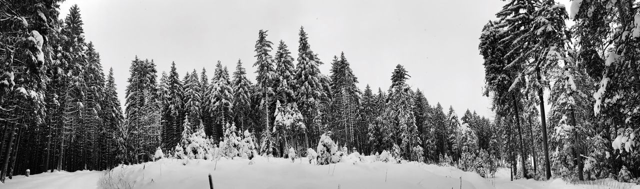 Snow Winter Forest White Trees Landscape Hiking Nature Panorama Perspective Relaxing Weekend Activities Outdoors