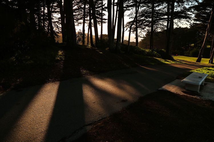 Shadow of trees on footpath in forest