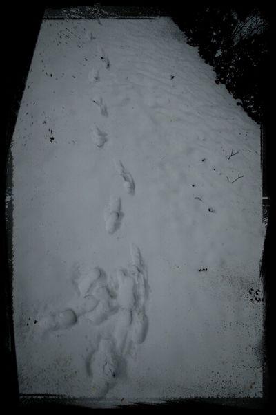 Spuren eines Unbekannten vor meinem Fenster. 1/2