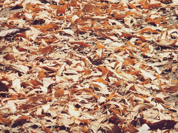 Dry Leaves - Fresh Nature Dry Fallen Leaves Neem 43 Golden Moments Yellow Leaves Golden Leaves Shades Colour Palette