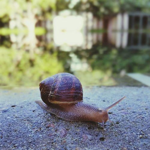 Snail Snail Trail Snail Mail Animal