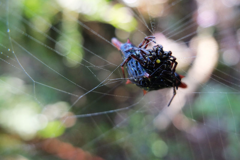 Animal Leg Animal Themes Animal Wildlife Animals In The Wild Beauty In Nature Close-up Complexity Day Fragility Insect Intricacy Nature No People One Animal Outdoors Spider Spider Web Survival Web