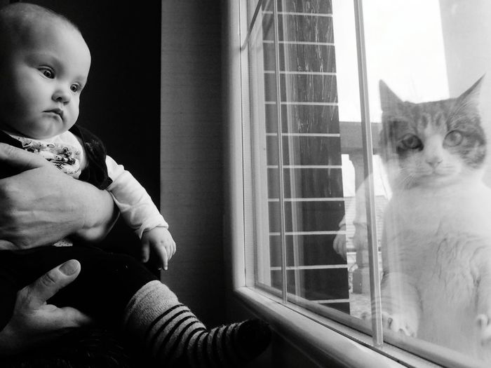 Close-Up Of Cute Baby Girl Looking Cat Through Window