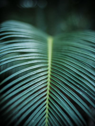 Palm leaf in