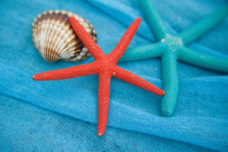 Close-up of artificial starfish and seashell on fishing net