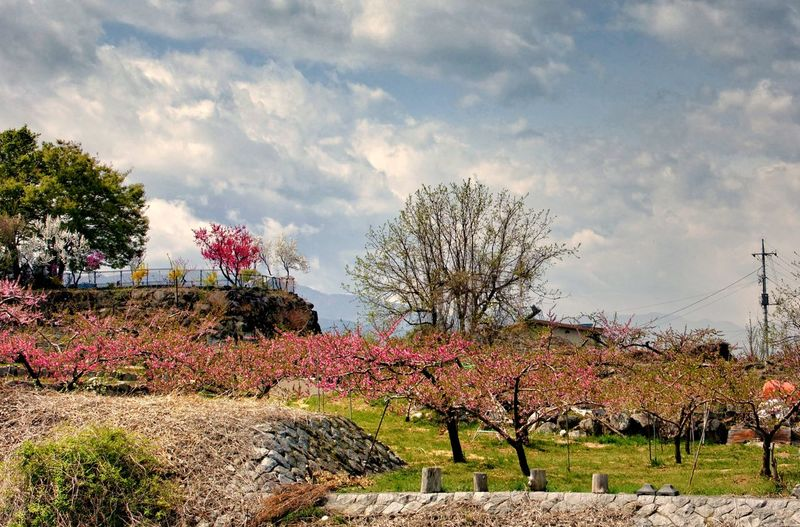 View of flowering plants in park against sky