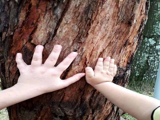 Mãos! Human Hand Close-up árvores, Natureza, Paisagens Naturais, Primavera Sao Paulo - Brazil Domingo🍀🍃 Isa Barbosa Bonjour ☺✌ Nature