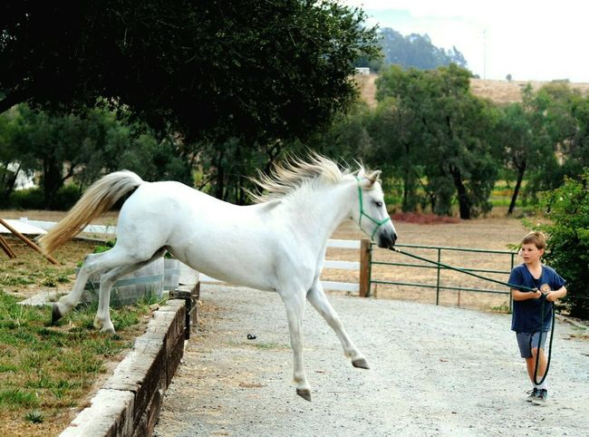 Tree One Animal Full Length Domestic Animals Horse Side View Lifestyles Leisure Activity Mammal Livestock Day Outdoors Young Adult Pony Pony❤️ Ponyboy Horses Horse Photography  Childhood