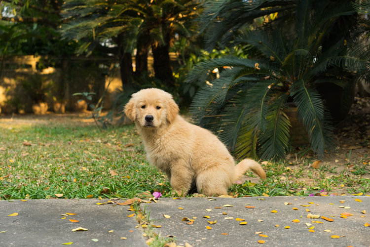 Dogs Dogs Dogs Of EyeEm Golden Retriever Running Cat Cats Day Dog Dog Love Dogslife Domestic Animals Domestic Cat Gloden Retriever Leaf Puppy Sleep Sleeping