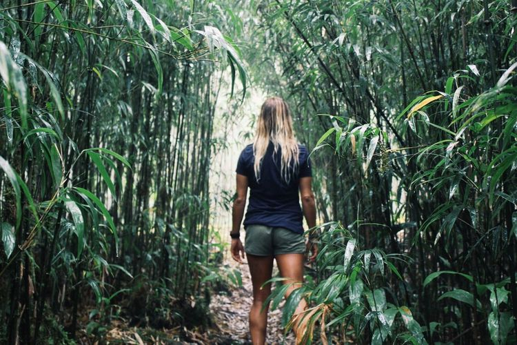 Rear view of young woman standing amidst bamboo grove in forest