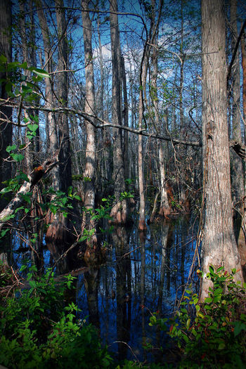 Bare Tree Beauty In Nature Branch Day Florida Florida Nature Forest Growth Nature No People Outdoors Reflection Scenics Sky Tranquility Tree Tree Trunk