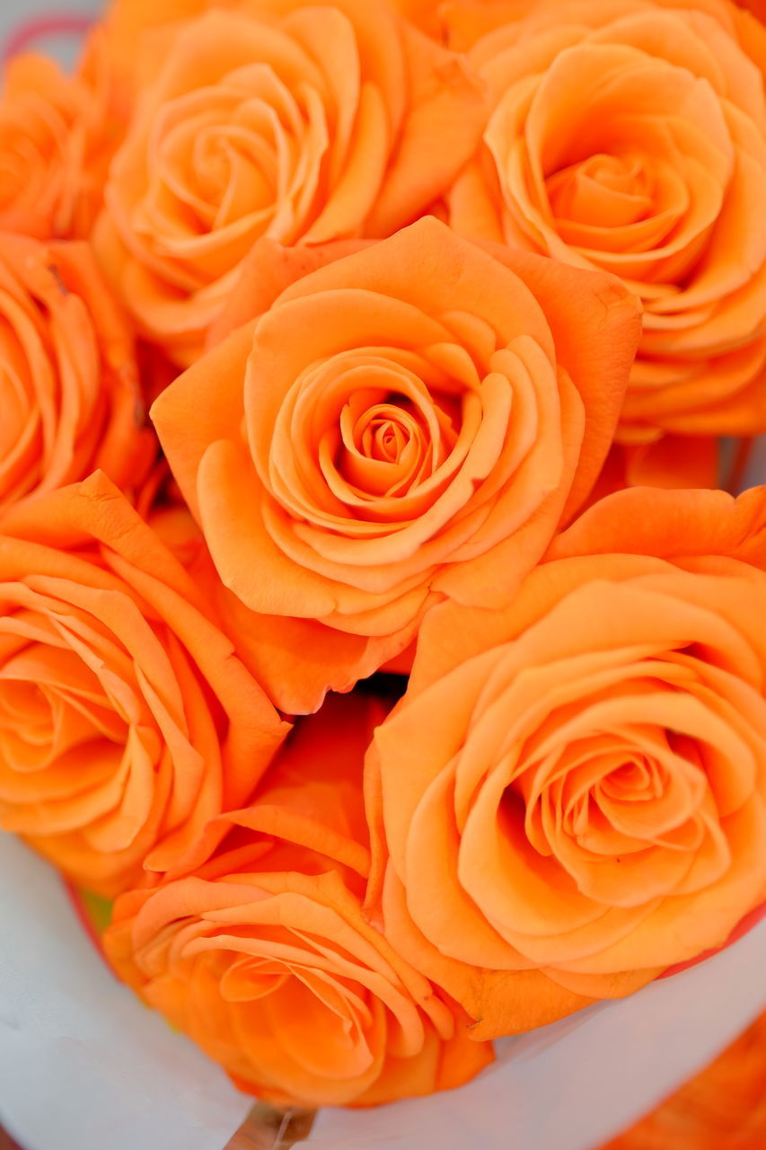 HIGH ANGLE VIEW OF ROSE BOUQUET ON ORANGE ROSES