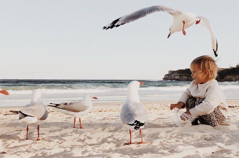 Girl feeding seagulls on beach