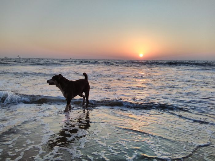 Urban Spring Fever EyeEm Nature Lover Sunset View Sunset_collection EyeEm Gallery Baga Beach Goa Dog On Beach Blue Wave