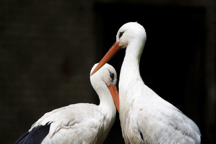 Close-up of storks at brookfield zoo
