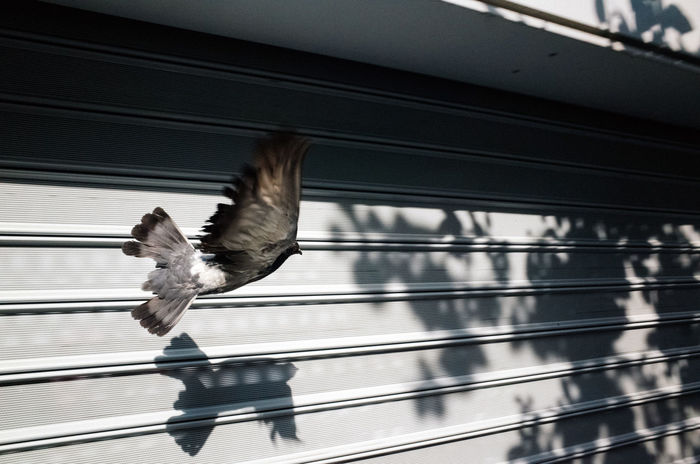 Close-up of bird flying against railing on sunny day