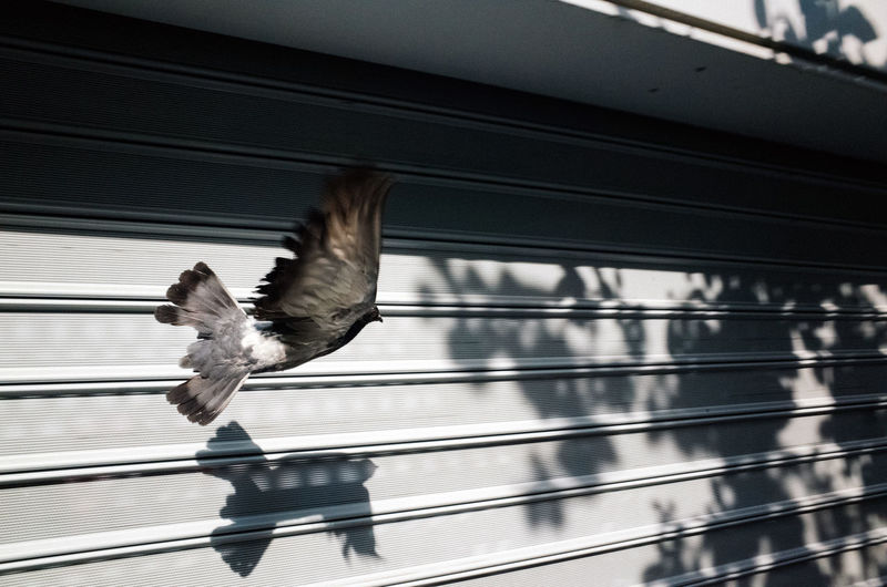 Close-up of bird flying against railing