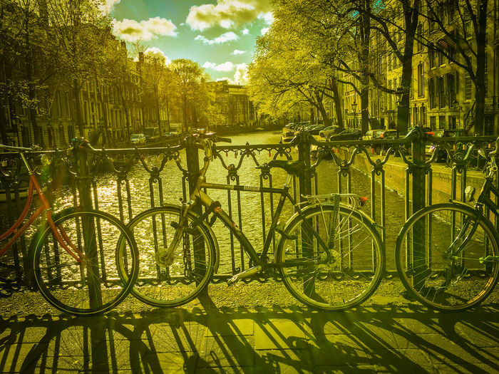 Bicycle by trees in city against sky