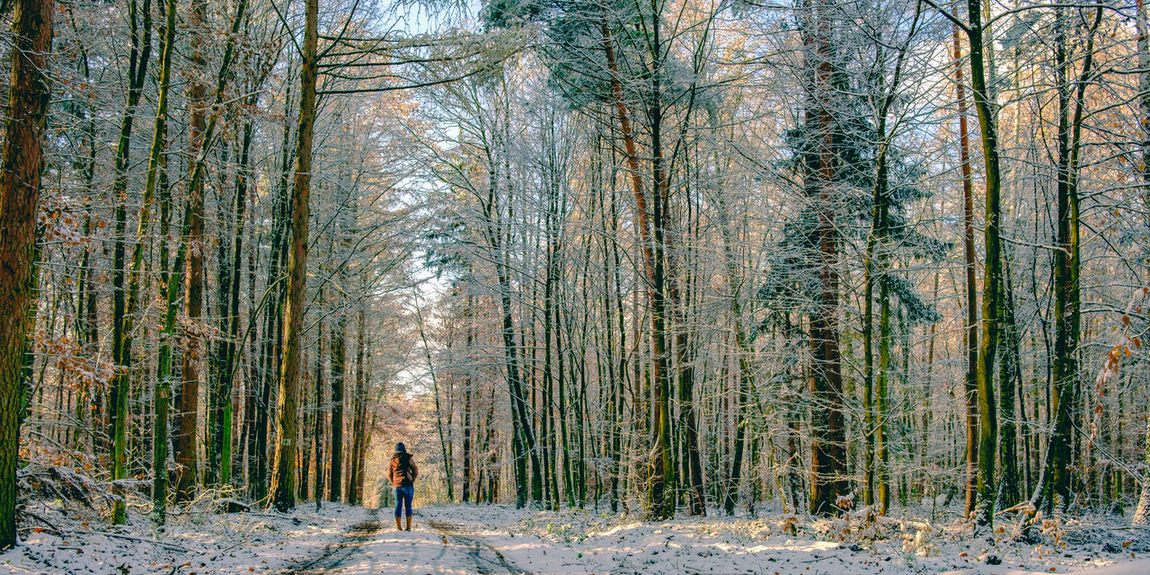 [57/365] 2016.12.05 Beauty In Nature Cold Temperature Day Forest Grove Growth Hiking Landscape Leisure Activity Lifestyles Majestic Nature One Person Outdoors People Real People Scenery Scenics Snow Snowing Tree Tree Trunk Winter Winter Woods