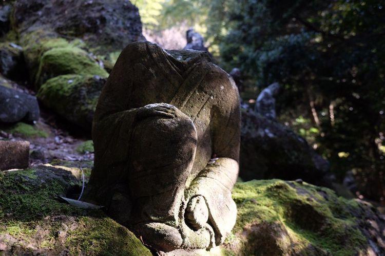 Nature Rock - Object Outdoors Day Close-up Tree Sculpture No People Statue 熊本 Zen EyeEm Best Shots Light And Shadow Unganzenzi 禅 五百羅漢 3XSPUnity Shadow Silhouette