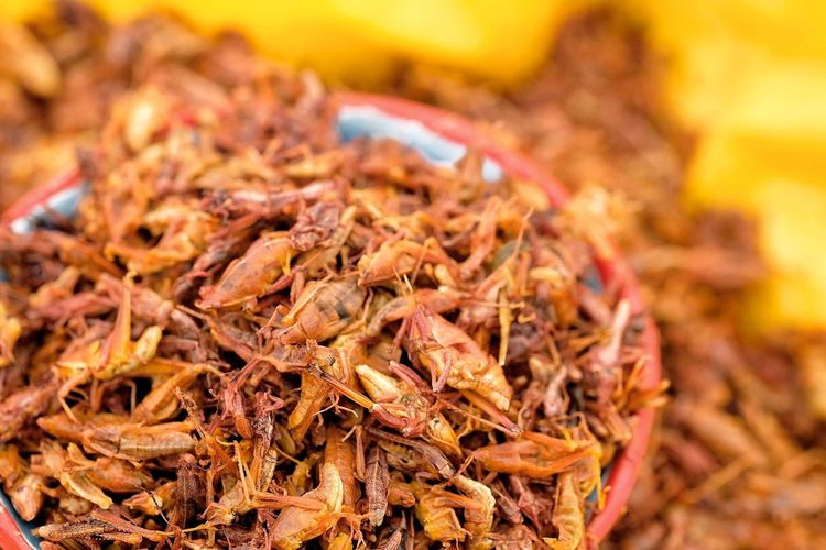 Close-Up Of Grasshopper For Sale In Market