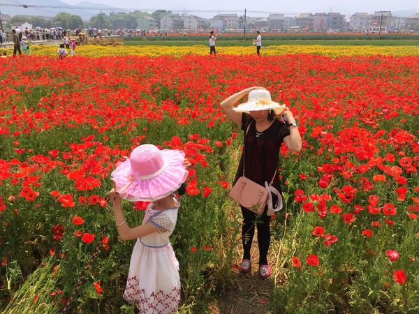 May 2015. Check This Out Capture The Moment Traveling Girl Taking Photos Flowers Coquelicot Red Red Flower Sunny