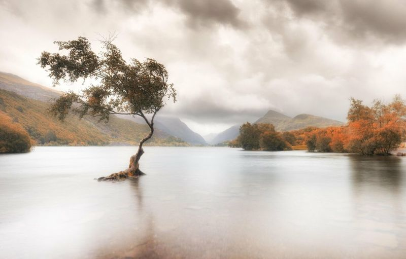 The lone tree in Llyn Padarn. Llanberis. Wales Tree Tree Sky Water Plant Cloud - Sky Beauty In Nature Tranquility Scenics - Nature Tranquil Scene Nature Lake Waterfront No People Day Non-urban Scene Reflection Idyllic Mountain Outdoors