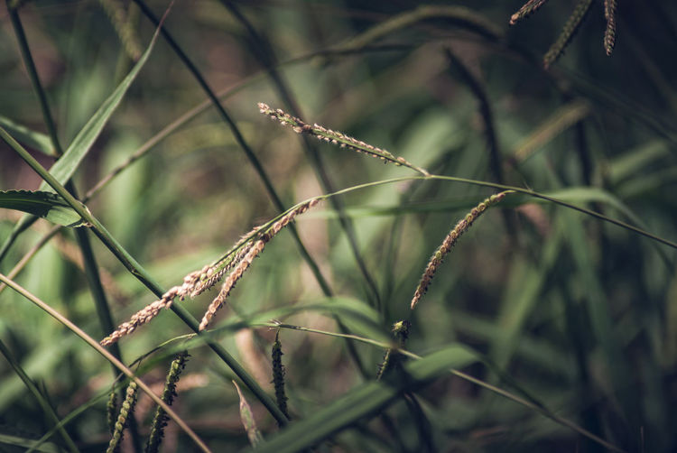 Close-Up Of Grass