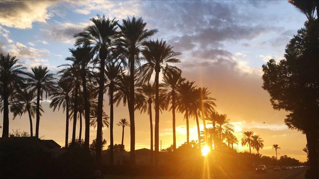 ♥️ Sunset Palm Tree Sun Silhouette Sky Sunbeam Beauty In Nature Nature Scenics Cloud - Sky Tranquil Scene Sunlight Tranquility No People Idyllic Outdoors Growth Tree Trunk Landscape