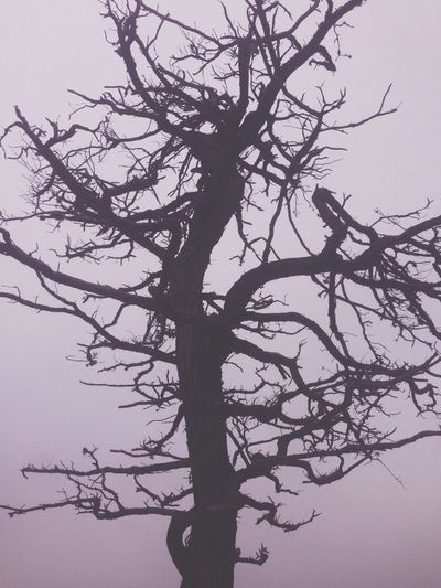 Cypress Tree.