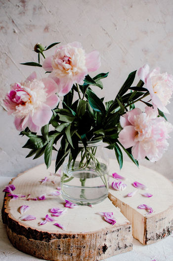 Pink peonies in bloom on the white background Peonies Beauty In Nature Bunch Of Flowers Decoration Flower Flower Arrangement Flower Head Flowering Plant Flowers In A Vase Inflorescence Peonies Bloom Petal Pink Color Pink Flowers Plant Part Vase White Background
