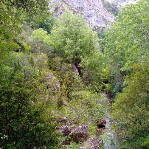 Nature Green Color Outdoors Beauty In Nature Parc Naturel Du Vercors France