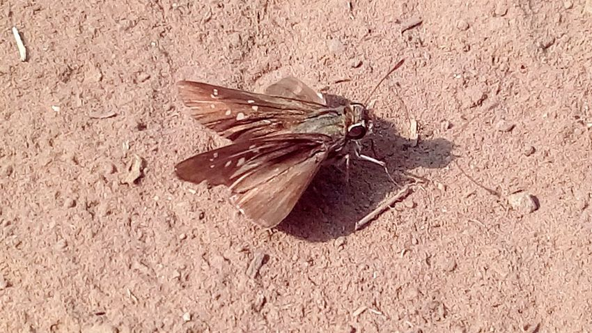 Insect Insect Photography Soil Earth Ground Close-up Nature Day Mobile Photography SSClicks SSClickPics SSClickpix