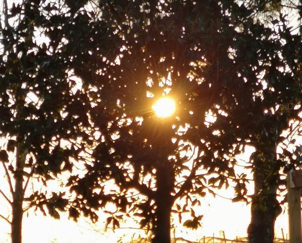 Holiday Moments Tree Tree Area Branch Forest Sunset Sunlight Tree Trunk Sun Leaf Sunbeam