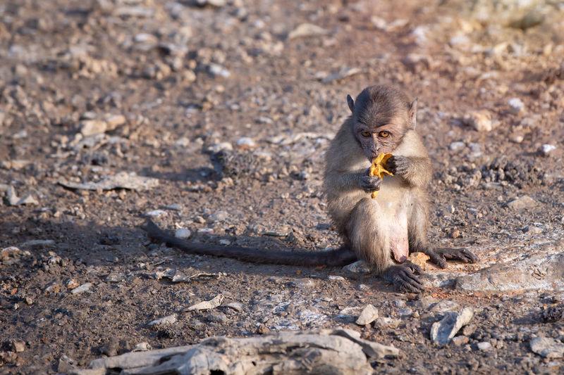 Lizard eating food on land