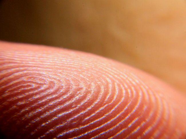 Finger Print Macro Macro Photography