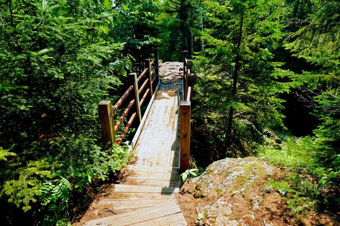 """Bridge to outcrop gorge view """" Bridge Forest Nature Tree Plant Green Tranquil Scene Greenery Woods"""