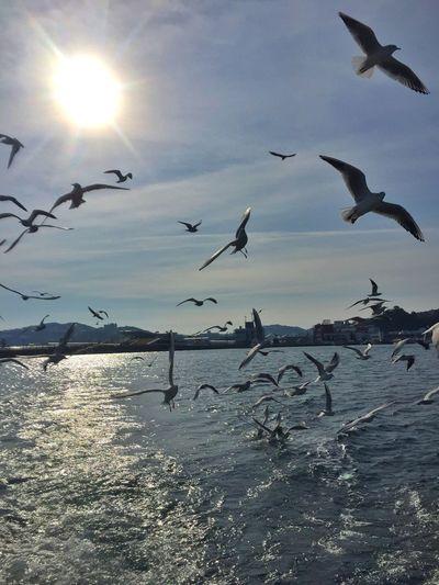 かもめ 遊覧船 海 Sea Sea View Seagull Pleasureboat