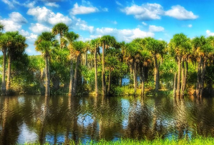 Tree Nature Water Reflection Growth Sky Palm Tree No People Beauty In Nature Tranquility Scenics Day Outdoors Tranquil Scene Lake